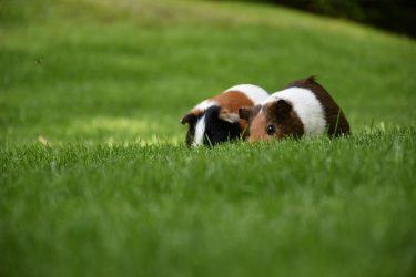 新しい相棒・ペットのお迎え【ハムスターを飼う時の心得】